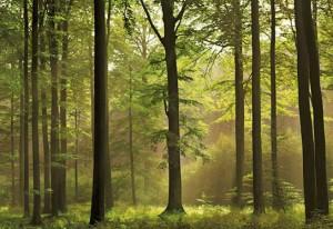 bosque_otonal