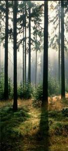 forest_mural de puerta