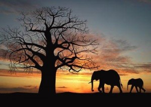 siluetas_africanas